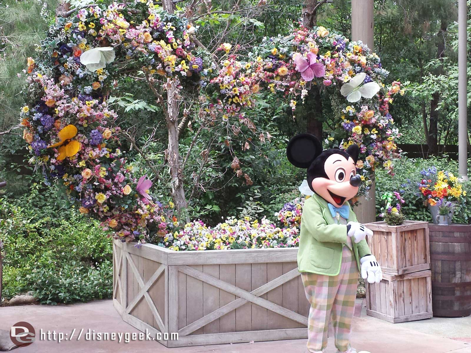 Mickey is in his springtime outfit at the Big Thunder Ranch Jamboree