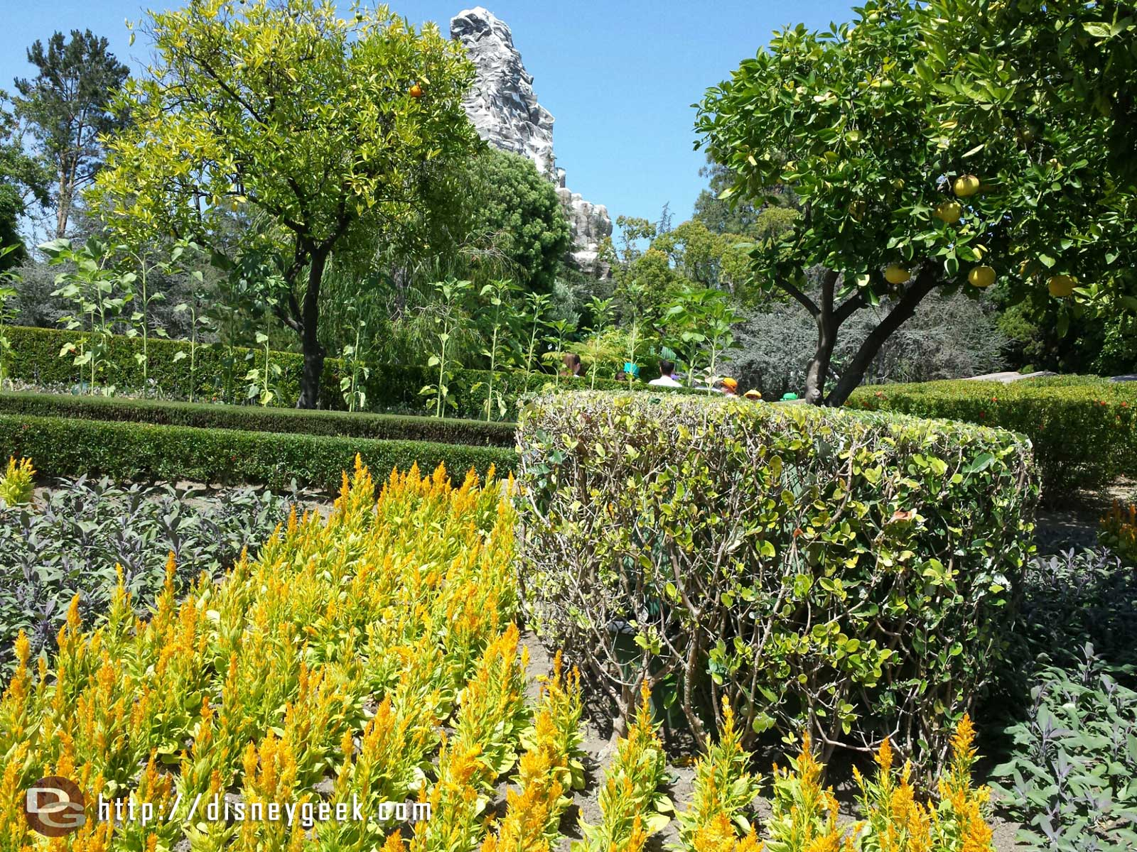 Tomorrowland plants and the Matterhorn in the background