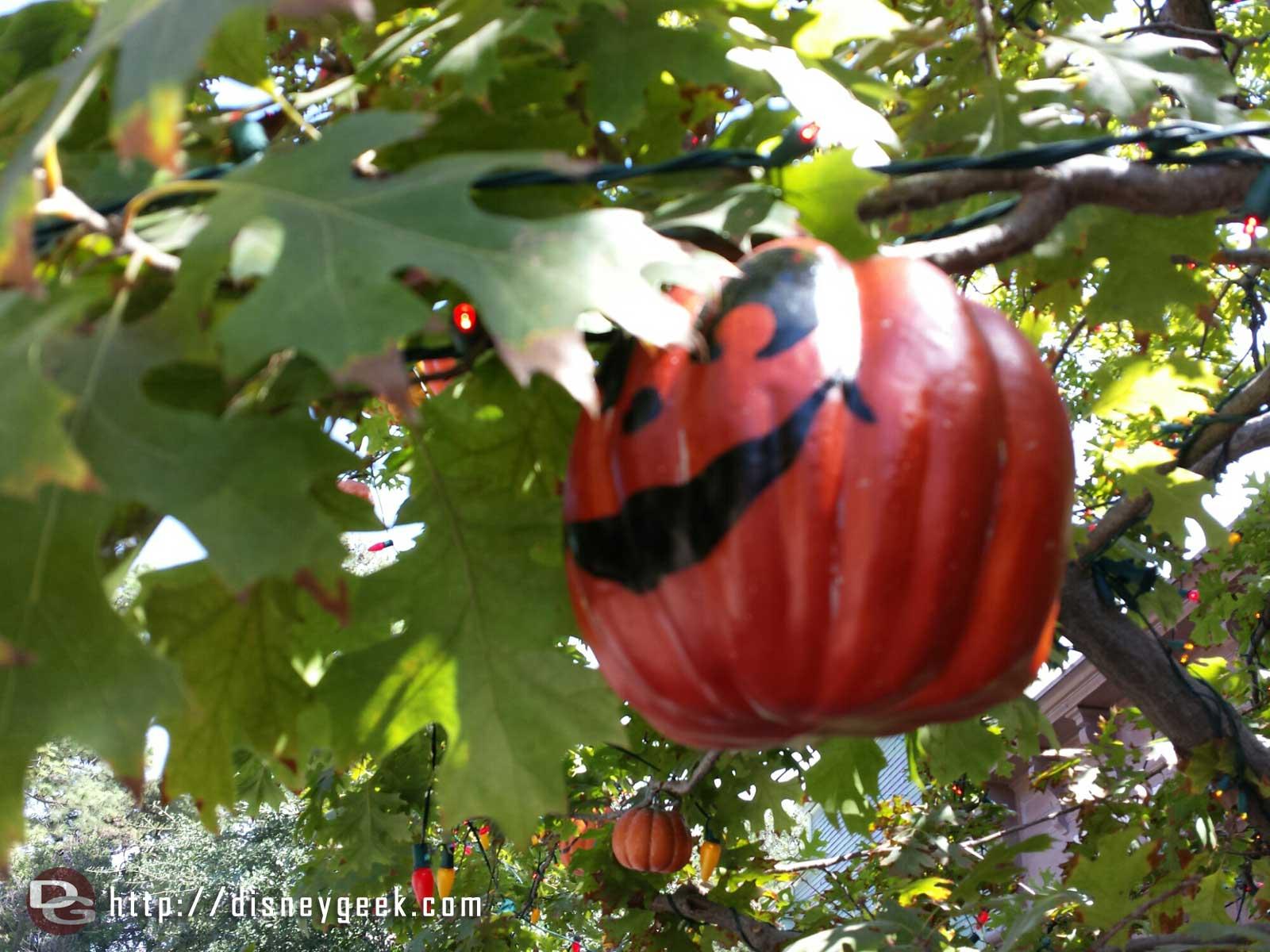 The Halloween tree has returned to Frontierland #Disneyland