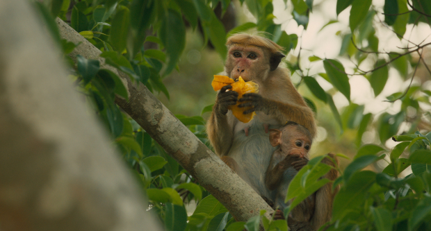 Disneynature's Monkey Kingdom Maya and Kip Ph: Film Frame ©Disneynature 2015