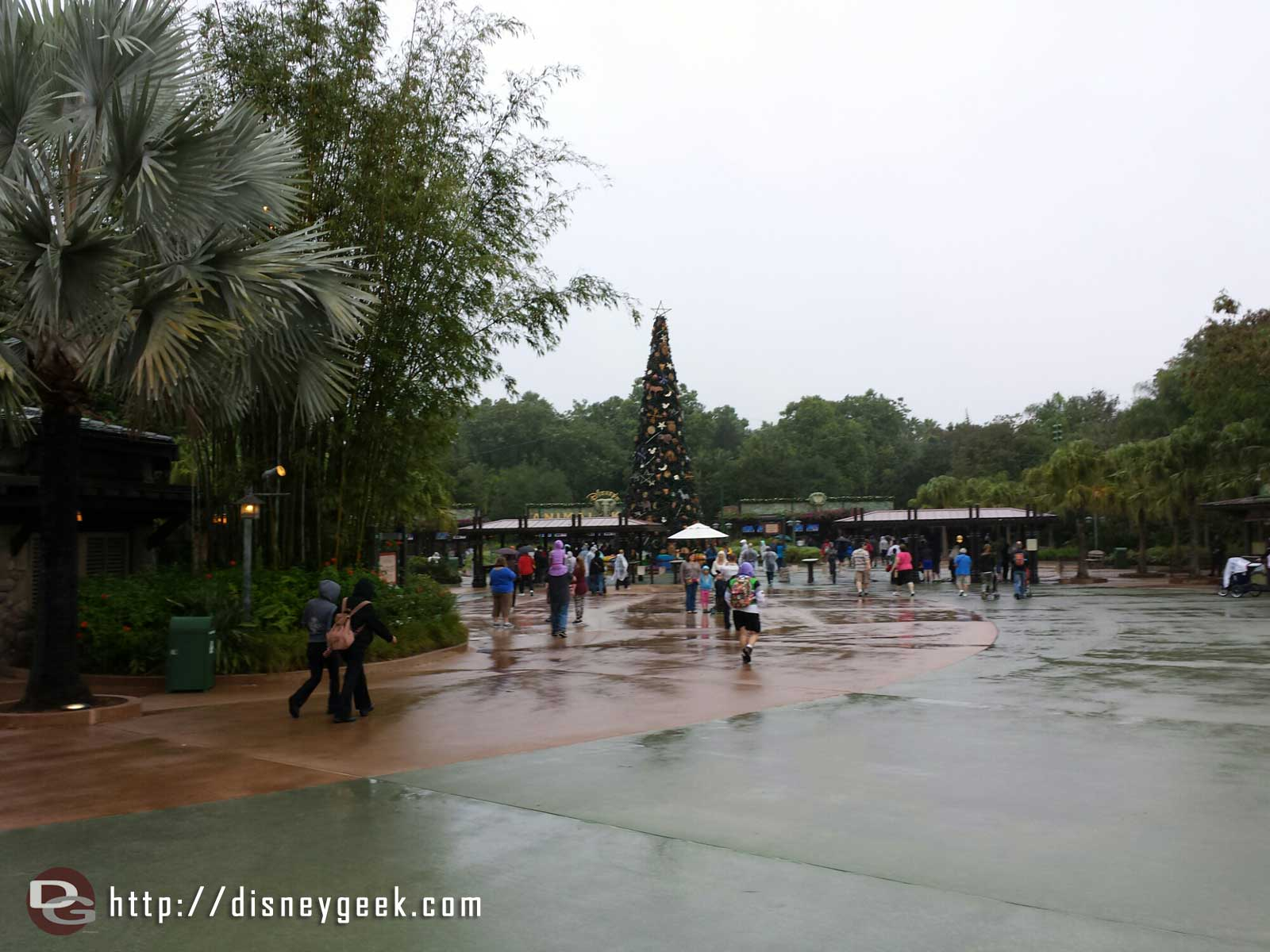 1st park this trip a rainy Animal Kingdom #WDW