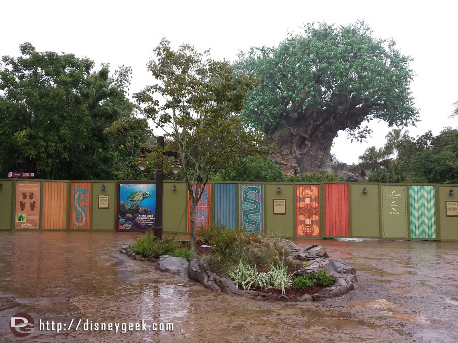 The Tree of Life plus construction walls as you enter the park #WDW