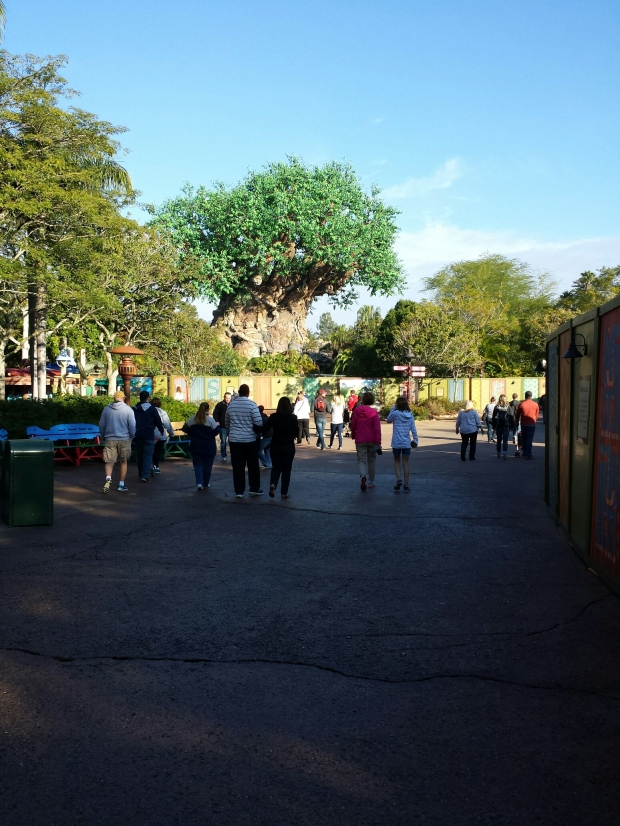 A much more pleasant day at the Animal Kingdom today compared to Monday.  Clear skies but cool to cold temperatures.