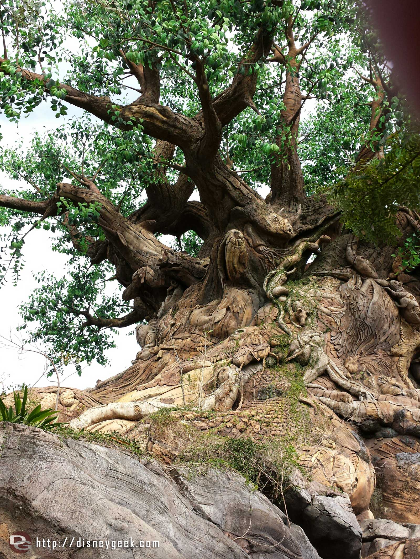 The Tree of Life – Disney's Animal Kingdom