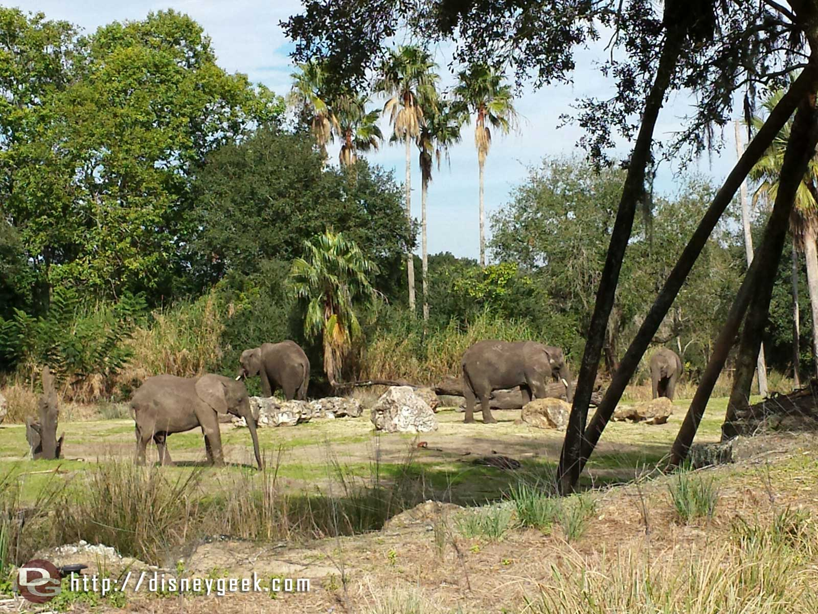 Elephants spotted while on safari – Disney's Animal Kingdom