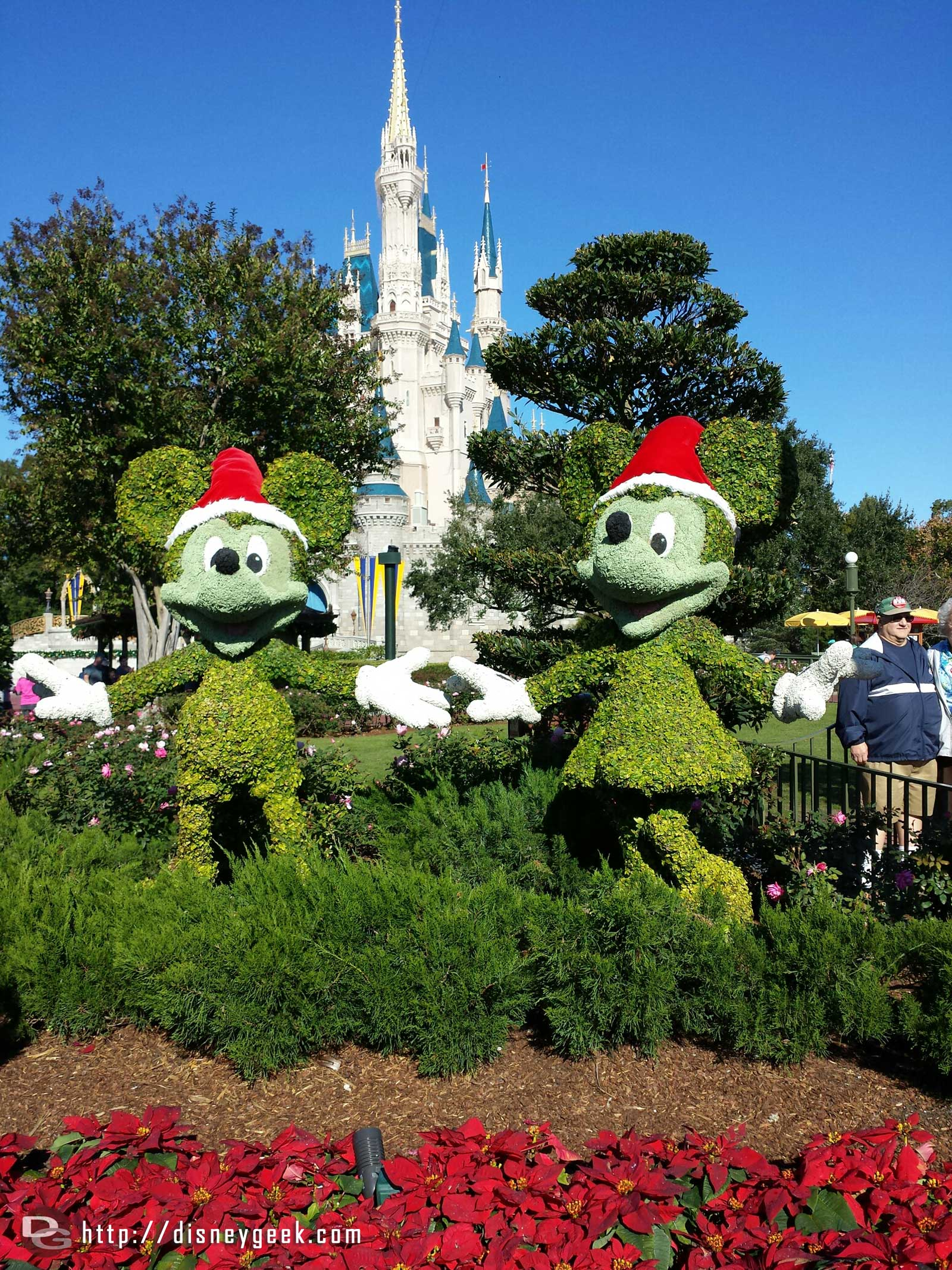 Mickey and Minnie topiaries dressed for the season.