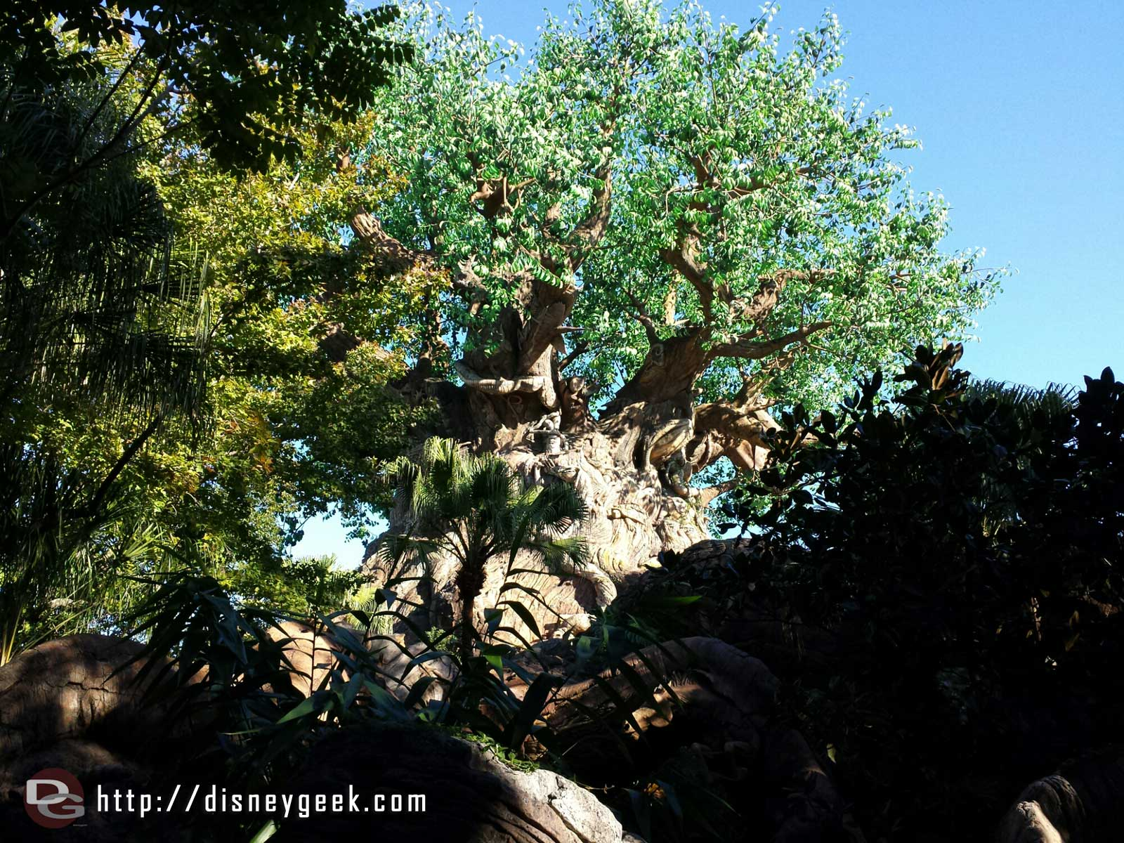 The Tree of Life at Disney's Animal Kingdom #WDW