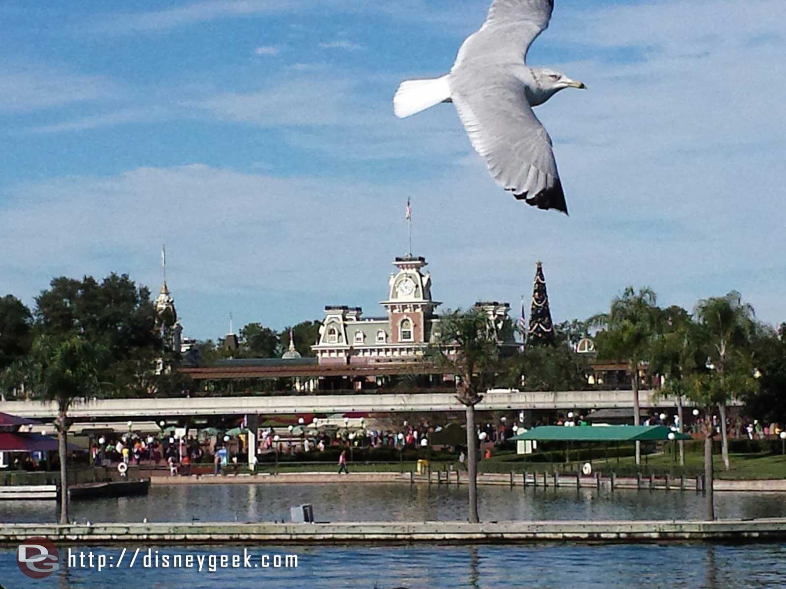 A seagull flew into my picture as we arrived at the Magic Kingdom #WDW