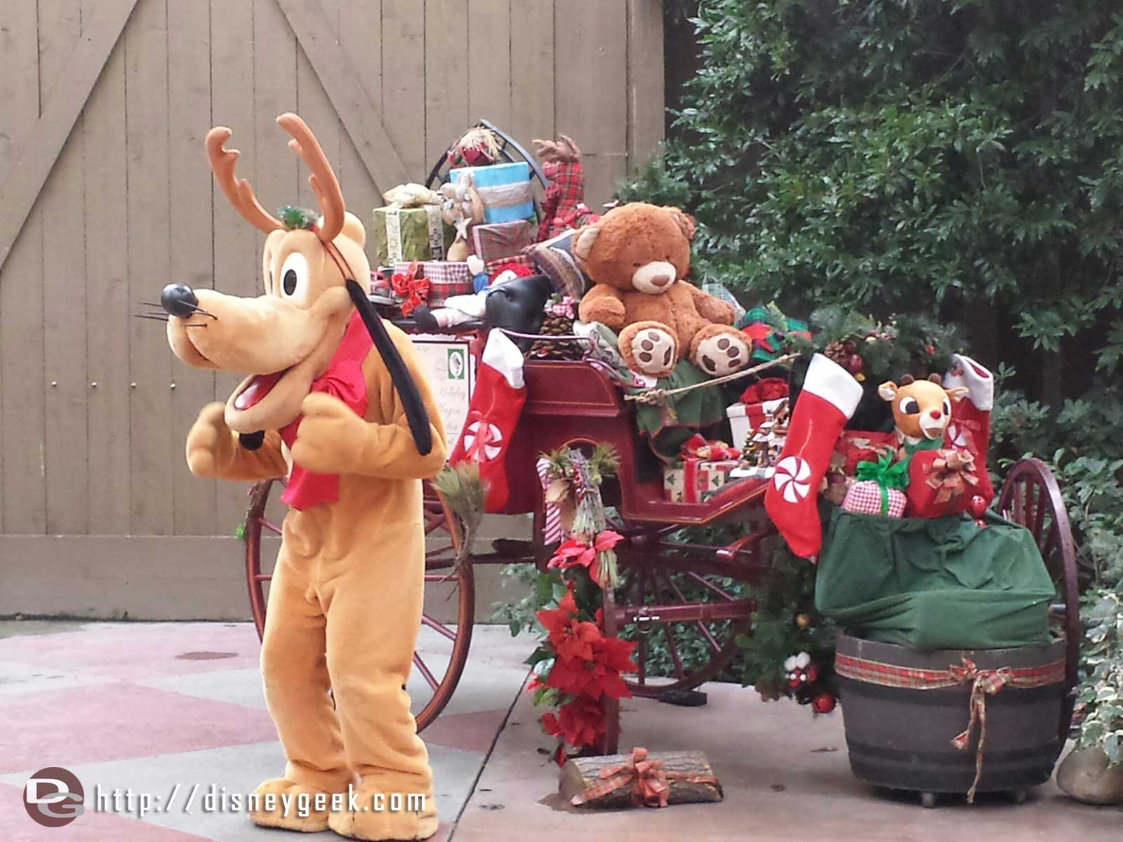 Pluto with his antlers on at the Jingle Jangle Jamboree
