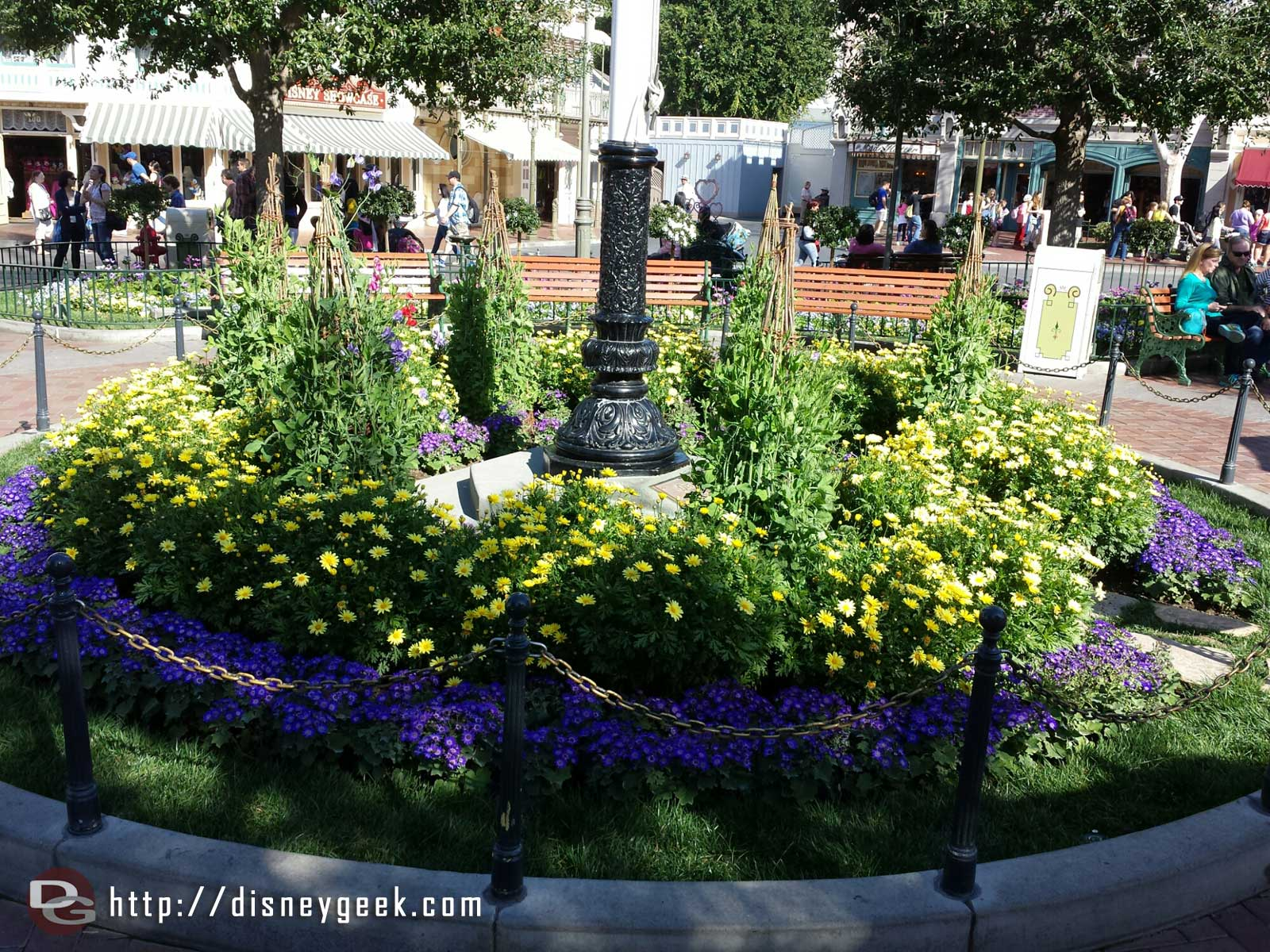 A look at the plants around the flag pole Town Square #Disneyland