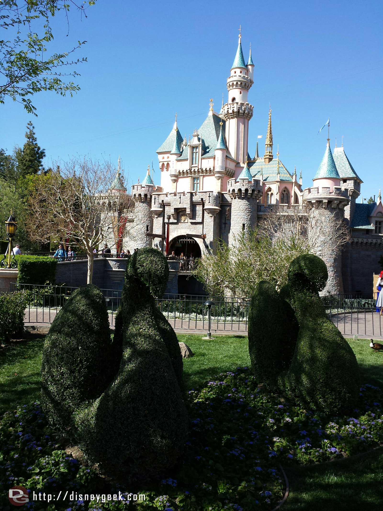 Sleeping Beauty Castle and swan topiaries #Disneyland