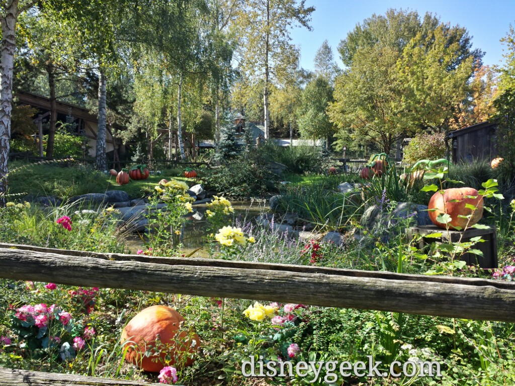 A pumpkin patch in the Cottonwood Ranch area of Frontierland #DisneylandParis