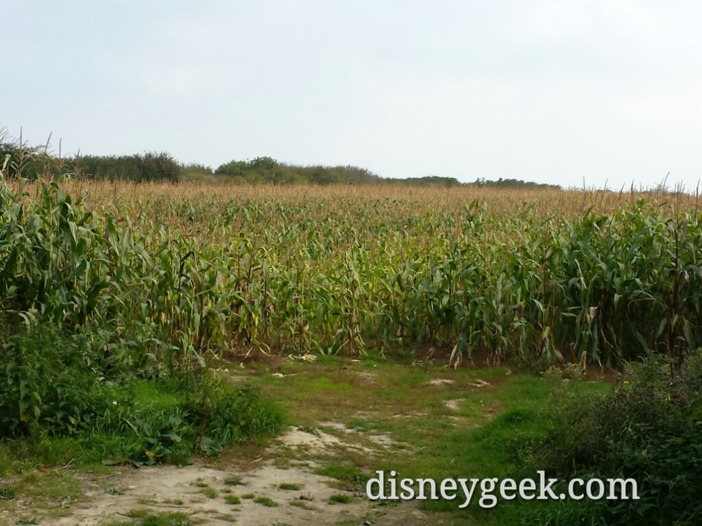 Driving through the corn fields of #France on our way to Pointe du Hoc