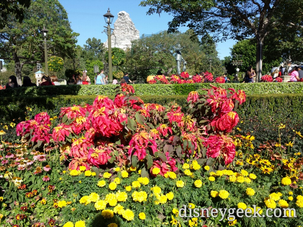Fall plantings in the hub with Matterhorn in the background #Disneyland