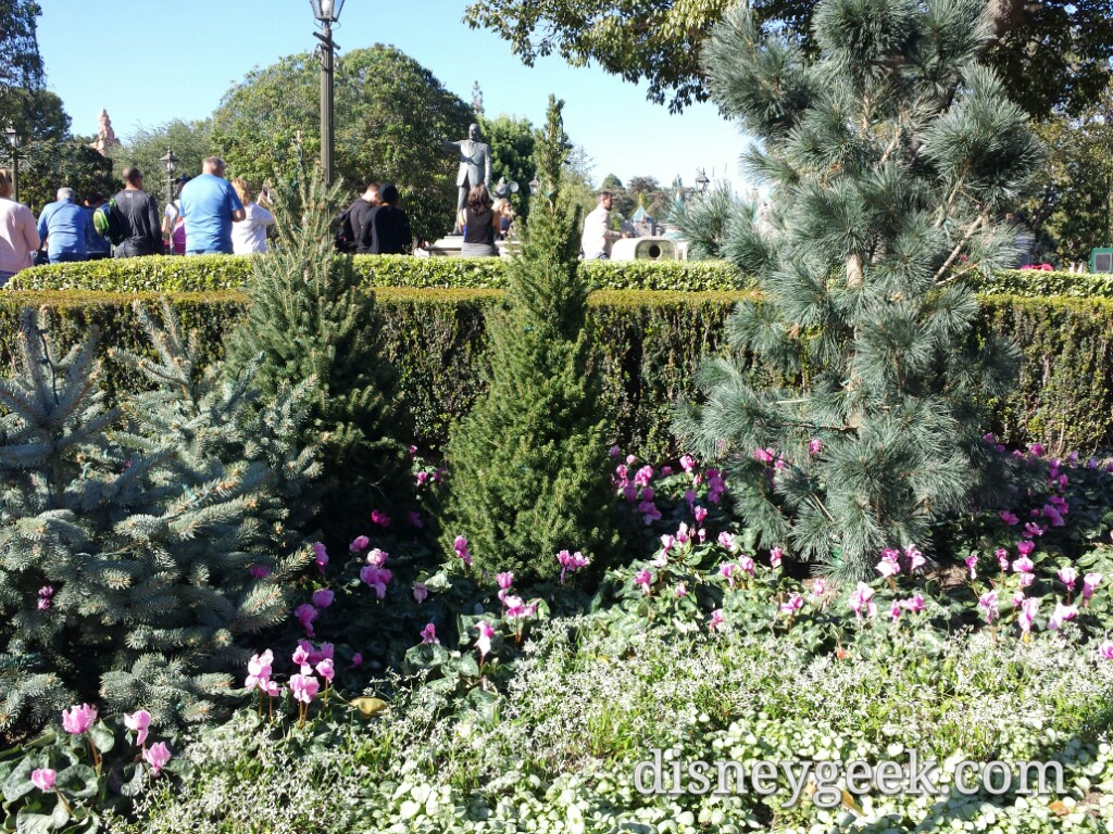 New winter plantings in the hub #Disneyland