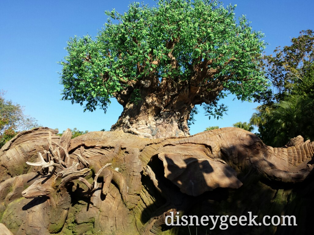 The Tree of Life this morning at Disney's Animal Kingdom #WDW