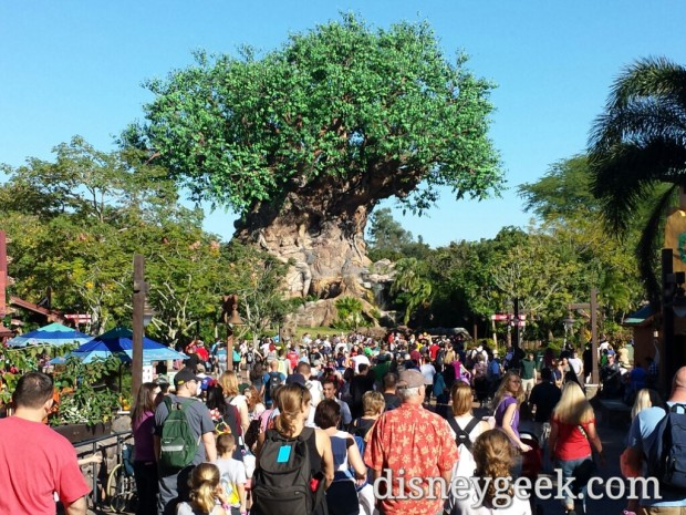 My first stop of the day was the Animal Kingdom.  A look at the Tree of Life as I arrived.