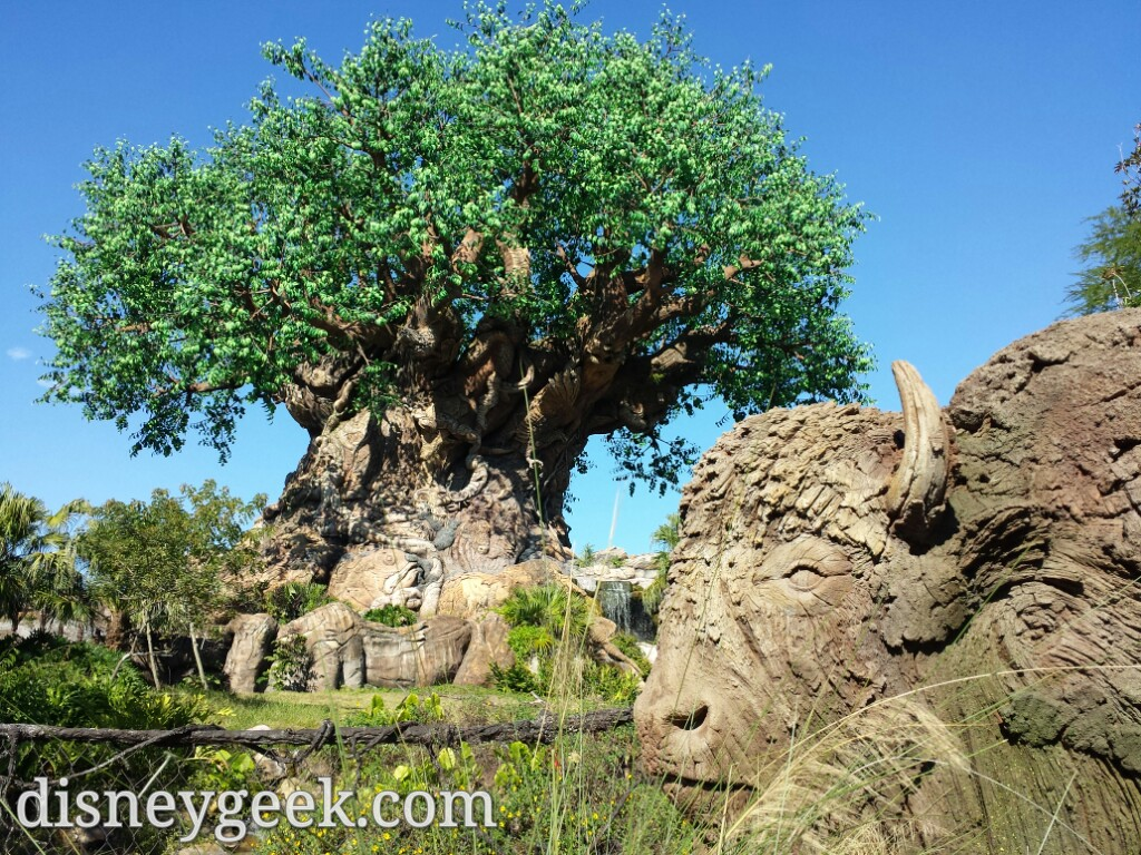 Really liked how this picture of the Tree of Life came out.