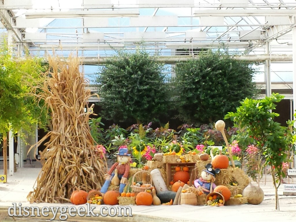 A fall display in Living with the Land greenhouse #Epcot