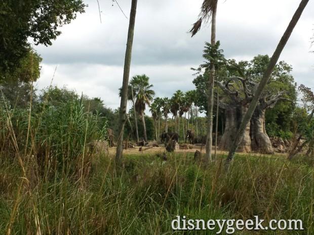 Elephants on the Kilimanjaro Safari