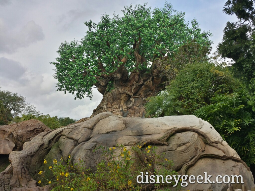 A final picture of the Tree of Life before leaving Animal Kingdom