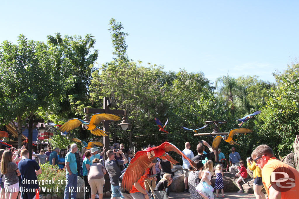 Winged Encounters @ Disney's Animal Kingdom