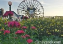 Paradise Pier spring blooms as the sun is settin at Disney California Adventure