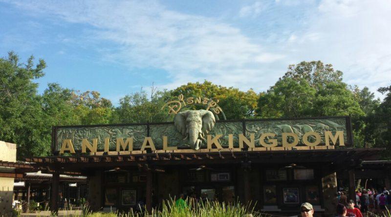 Starting my day at Disney's Animal Kingdom #WDW