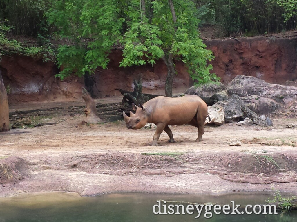Visited Disney's Animal Kingdom this morning – some pictures as I roamed the park