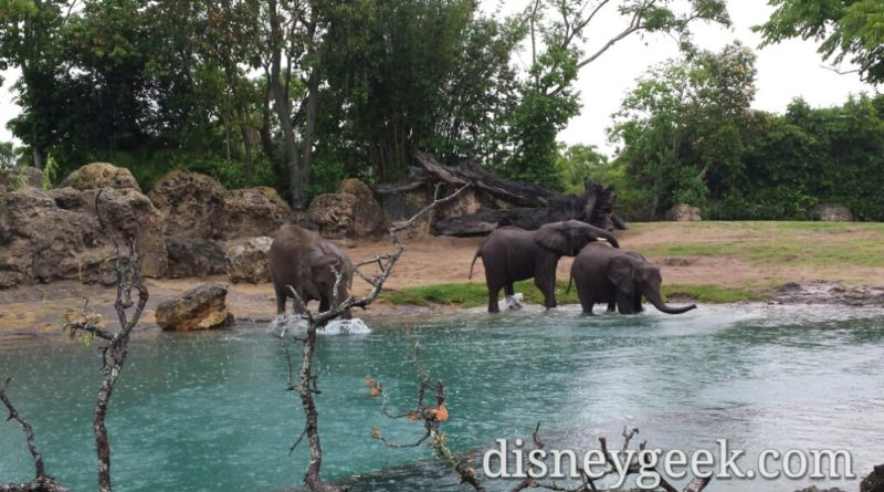 Kilimanjaro Safari - Elephants at play in the water