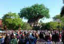 Disney's Animal Kingdom – several pictures taking a look around the park this morning