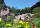 Disney's Wilderness Lodge walk around & construction