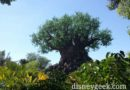 Last morning visit to Disney's Animal Kingdom (several pictures)