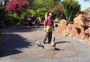 Some geese roaming around Frontierland @DisneylandToday
