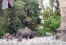 #JungleCruise #LostSafari #Disneyland