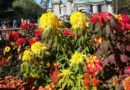 Fall plantings in the hub #Disneyland
