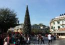 Arriving at Disneyland – Town Square Christmas tree