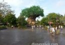 Afternoon & evening at Disney's Animal Kingdom