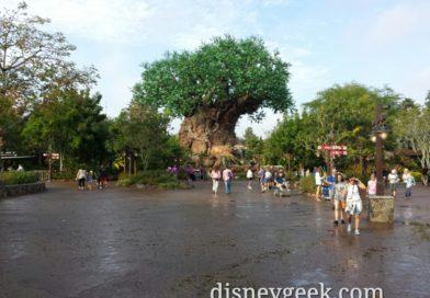Afternoon & evening at Disney's Animal Kingdom