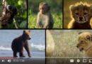 Disneynature: Growing Up Wild – Jason's 1st Impressions