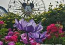Spring blooms in Paradise Pier at Disney California Adventure