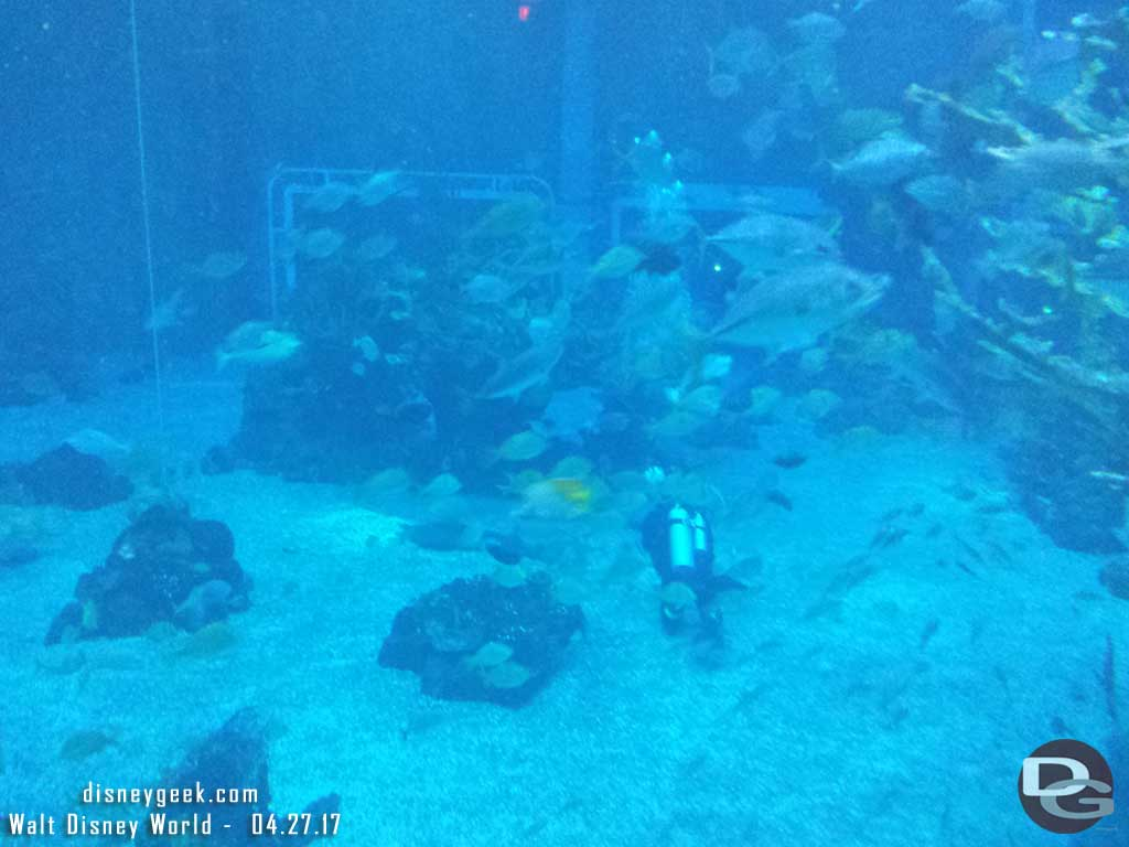 Fish feeding going on in the main tank