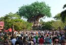 Tree of Life & crowd waiting for the park to open