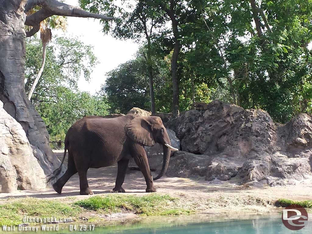Elephant on Kilimanjaro Safari in Disney's Animal Kingdom