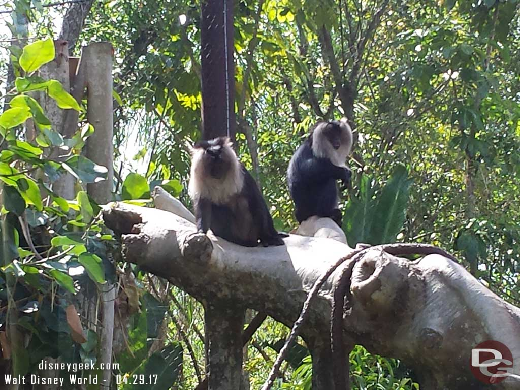 Monkeys on Maharajah Jungle Trek