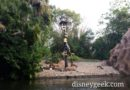 The rhino is missing on the Jungle Cruise at WDW Magic Kingdom