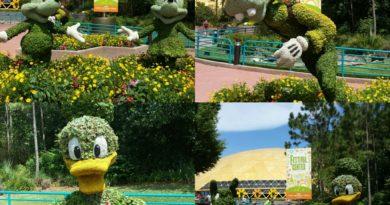 Epcot – Future World topiaries – Mickey, Minnie, Donald, Goofy & Pluto