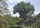 WDW Day 3 – Morning at Disney's Animal Kingdom