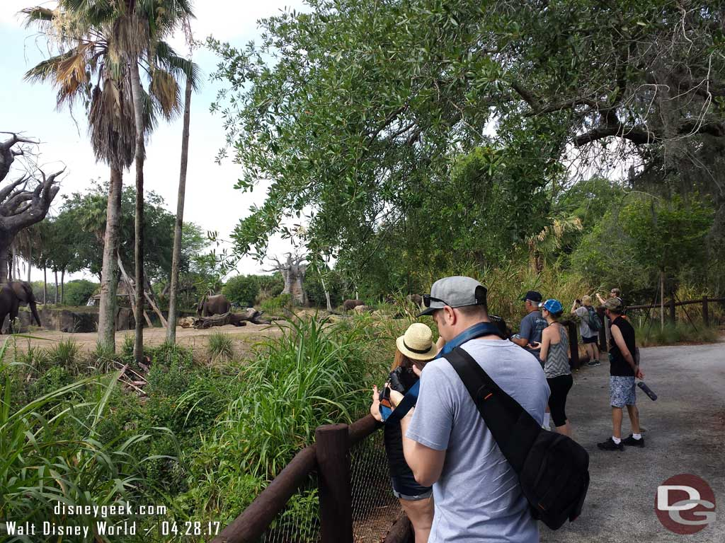 Caring For Giants at Disney's Animal Kingdom