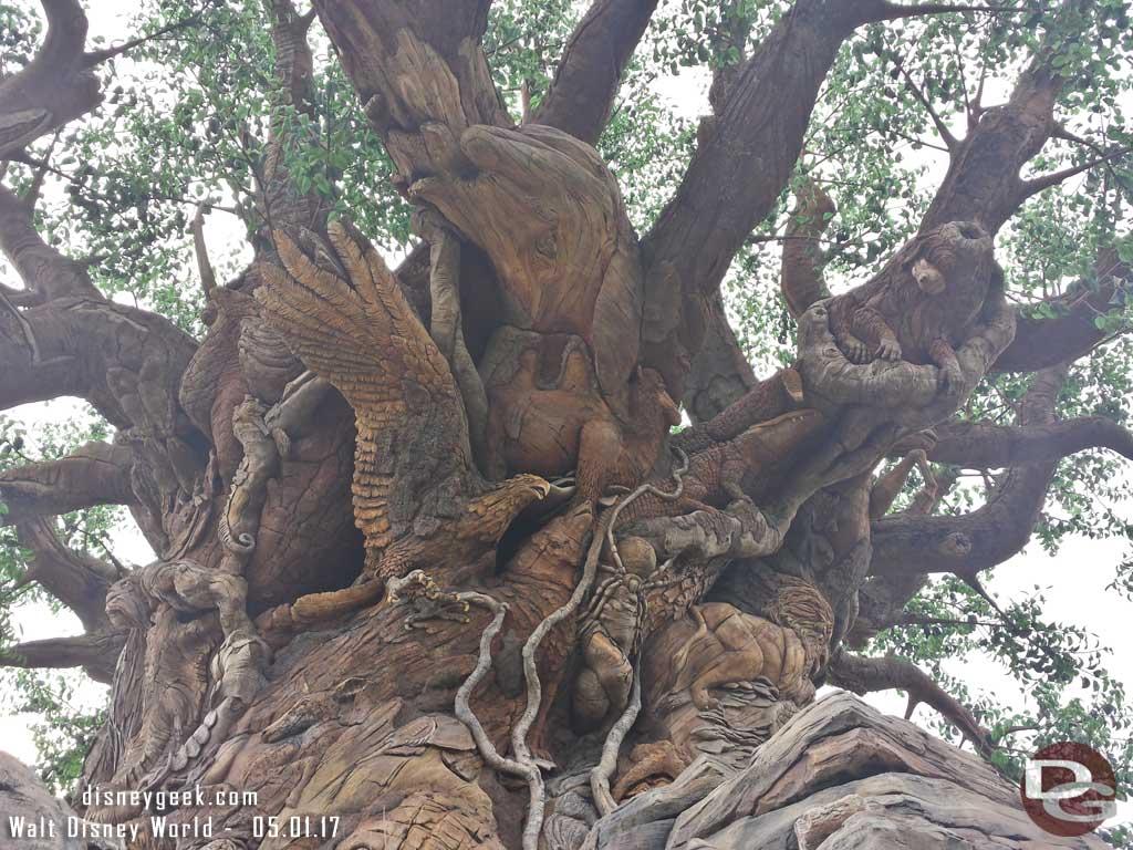 Walked around the Tree of Life Gardens